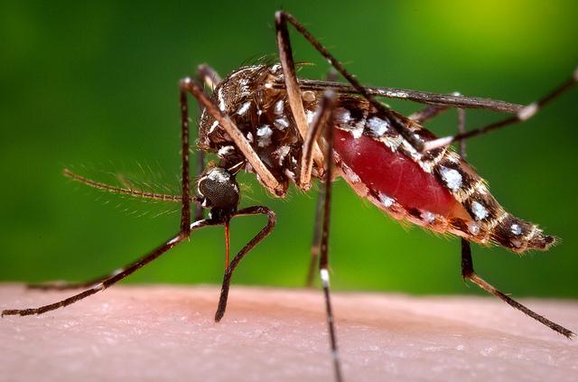 ワクチン マラリア