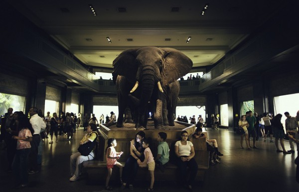 elephant in he room
