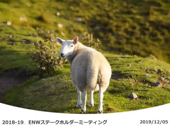 ステークホルダーミーティング資料の表紙。緑の丘にいる羊の後ろ姿