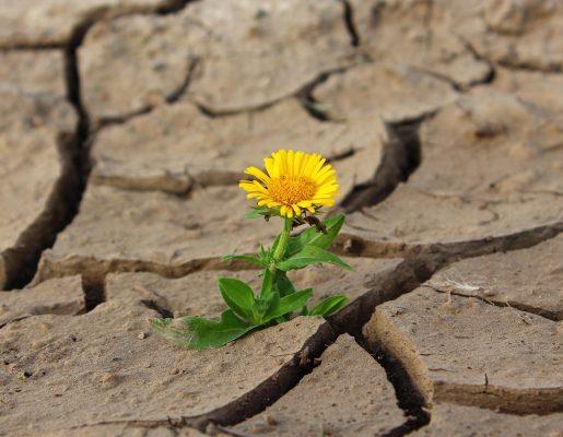 枯れた土地に咲く黄色い花